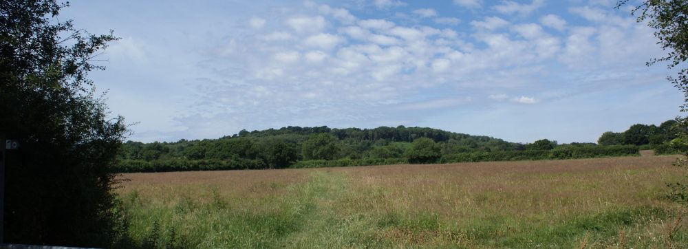 View towards Denne Hill from Kerves Lane